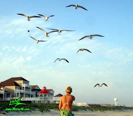 Photo of a flock of Seagulls catching & eating pasta thrown into the air Seagull Feeding Time