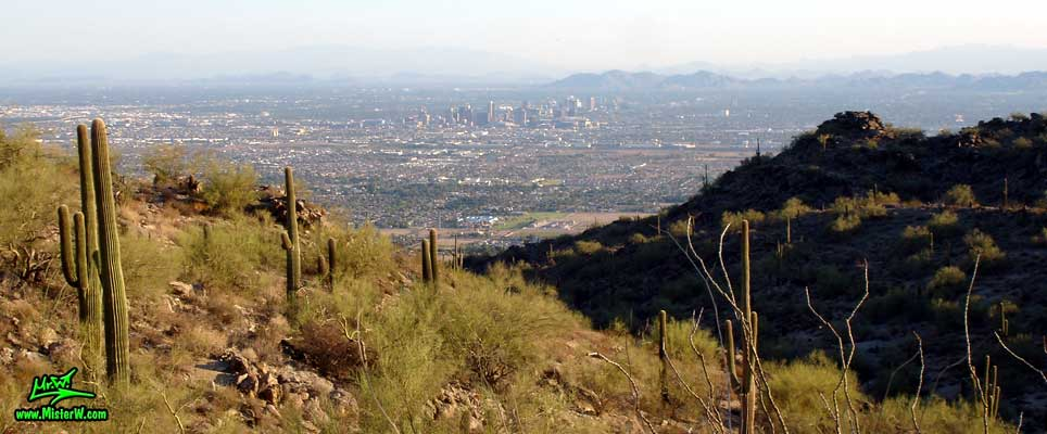 Photo of Saguaros & Downtown Phoenix, taken from the South Mountain Park in August 2007 Phoenix & Saguaro Cacti from the South Mountain Park